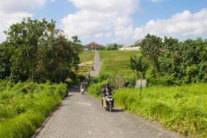 rice fields canggu bali