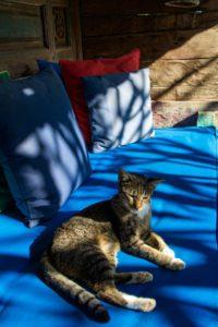 cat room desa seni canggu bali