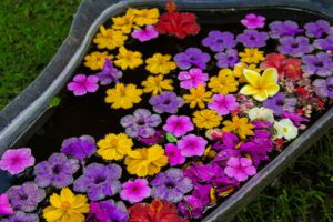 flower bath desa seni canggu
