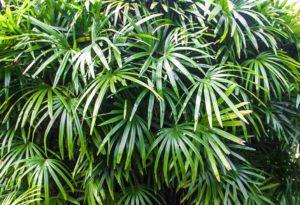garden plants desa seni canggu bali