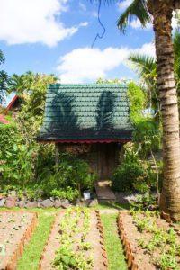 vegetable garden desa seni canggu