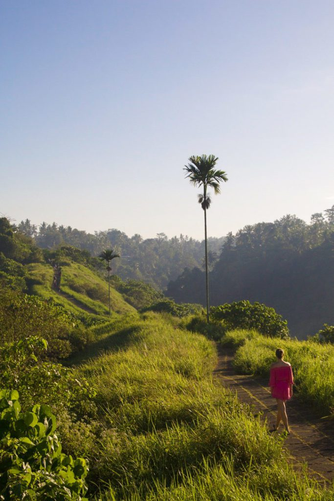 sunrise campuhan ridge walk ubud bali