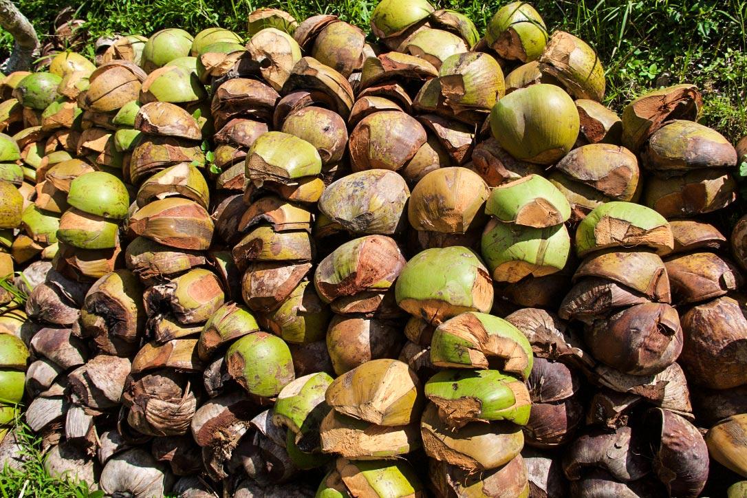 coconuts ubud bali