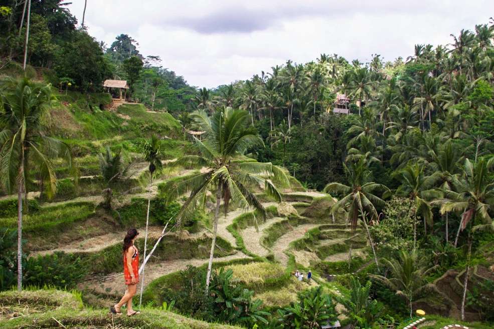 View at the Tegallalang rice terraces in Ubud Bali