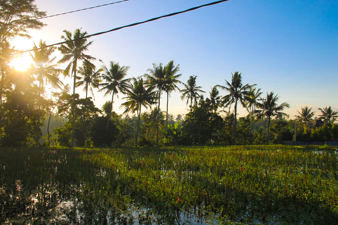 sunrise ubud rice fields bali