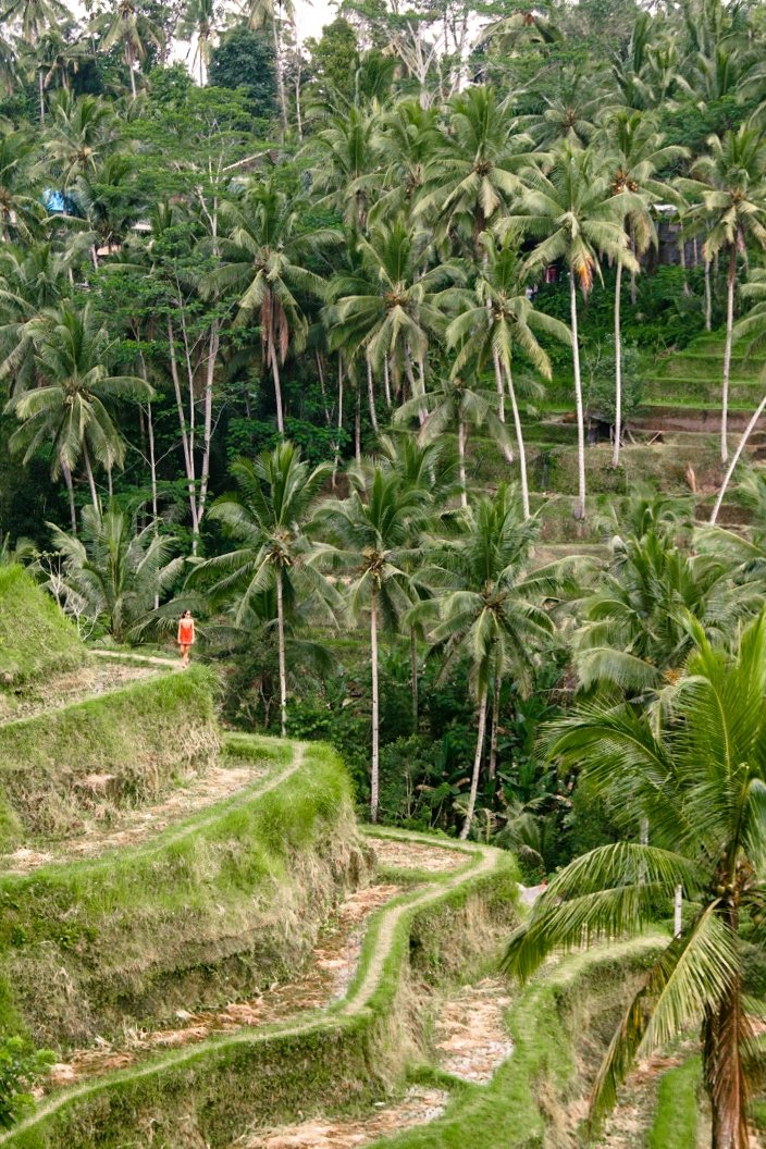 View on the Tegallalang rice terraces in Ubud Bali