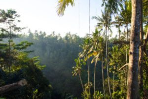 jungle hills ubud bali
