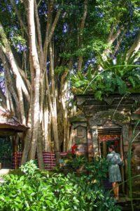 ubud svarga loka wellness resort