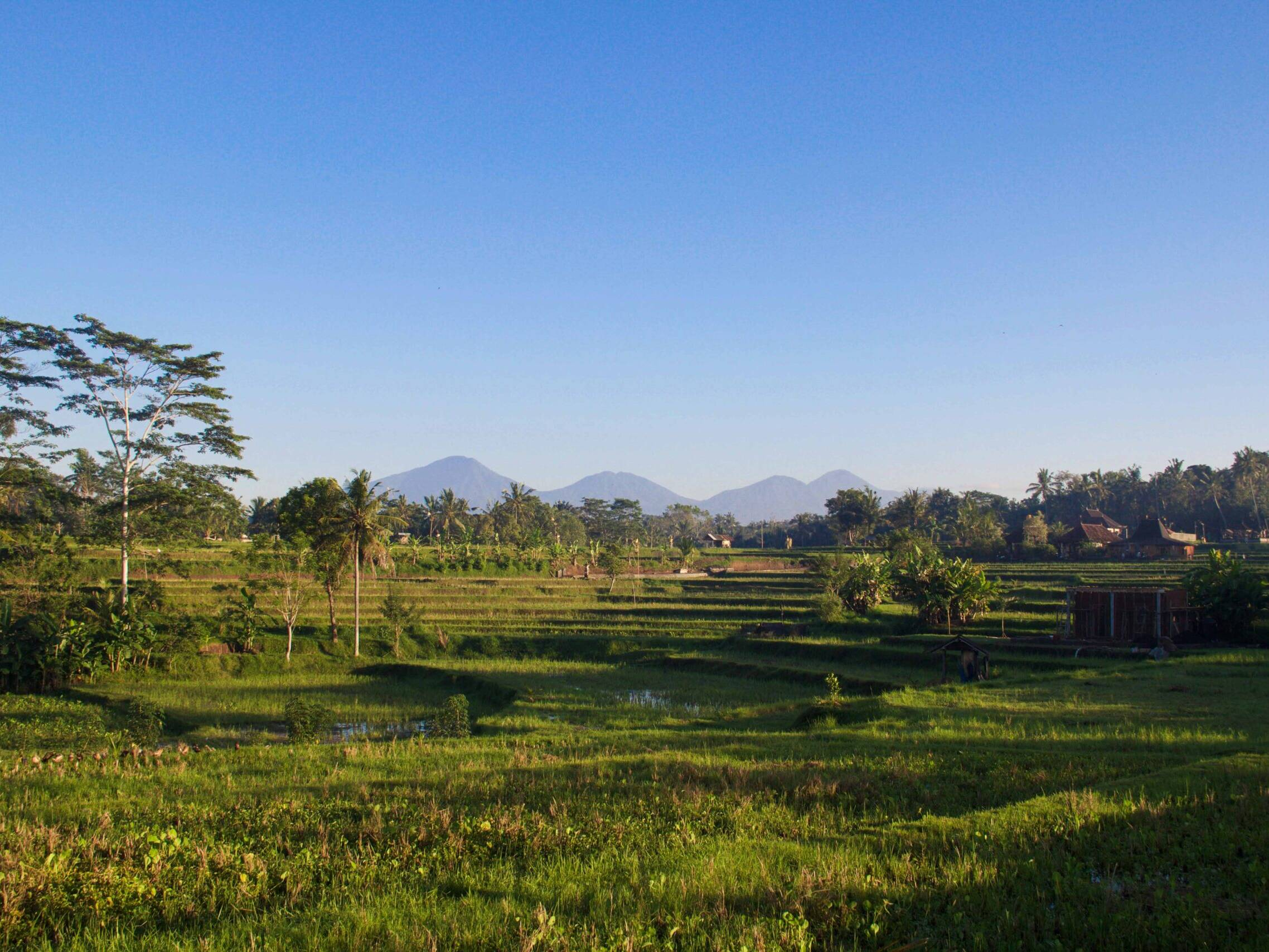 ubud ricefields bali