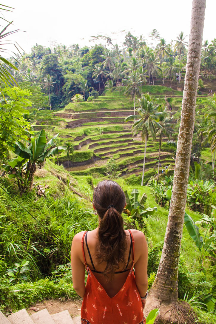 view tegallalang rice terraces ubud bali