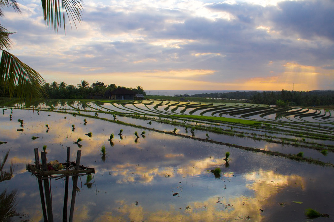 balian beach rice fields sunset bali