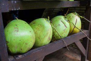 coconuts pondok pitaya balian beach bali