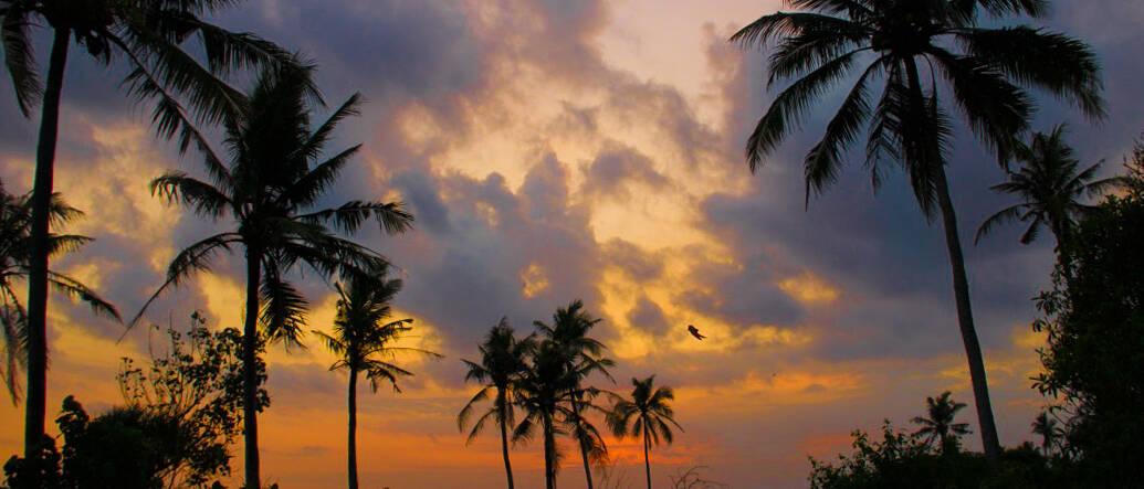 sunset kedungu beach palmtrees bali