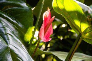 flowers garden Lodges Ekologica Java