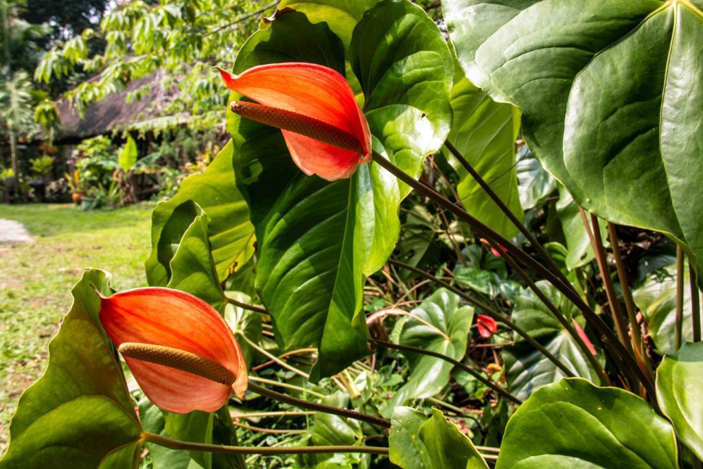 flowers portibi farms java indonesia