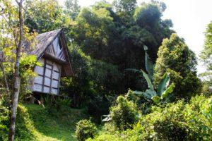 jungle room portibi farms java