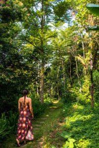 portibi farms lodges ekologica java