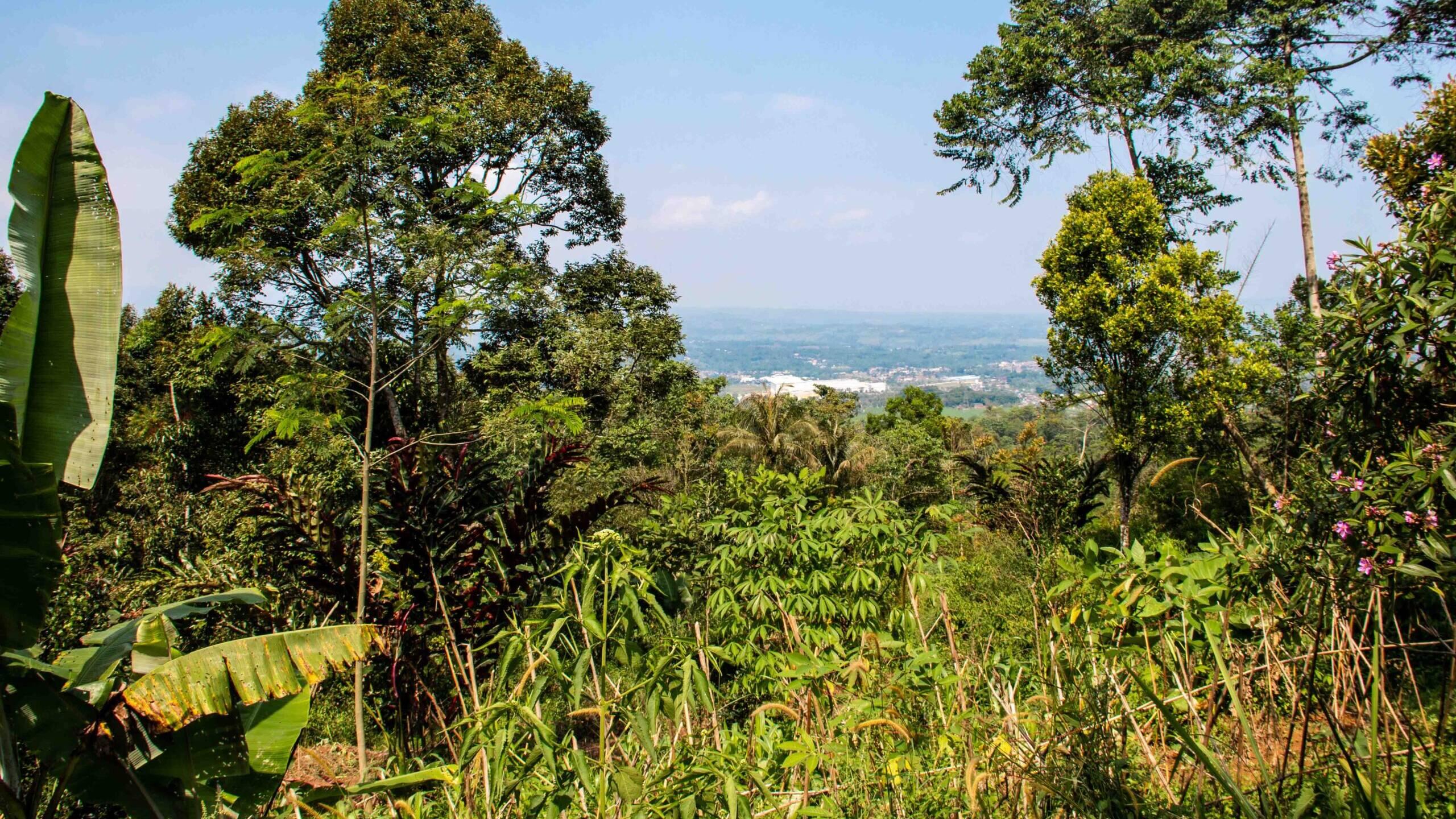 view java at lodges ekologica at portibi farms