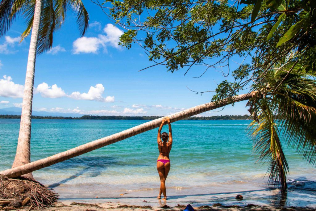 Palmtrees Playa Boca del Drago Bocas del Toro Panama