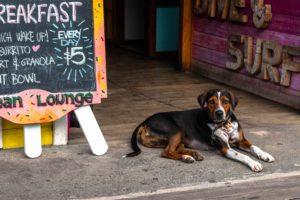 dog bocas town Bocas del Toro Panama