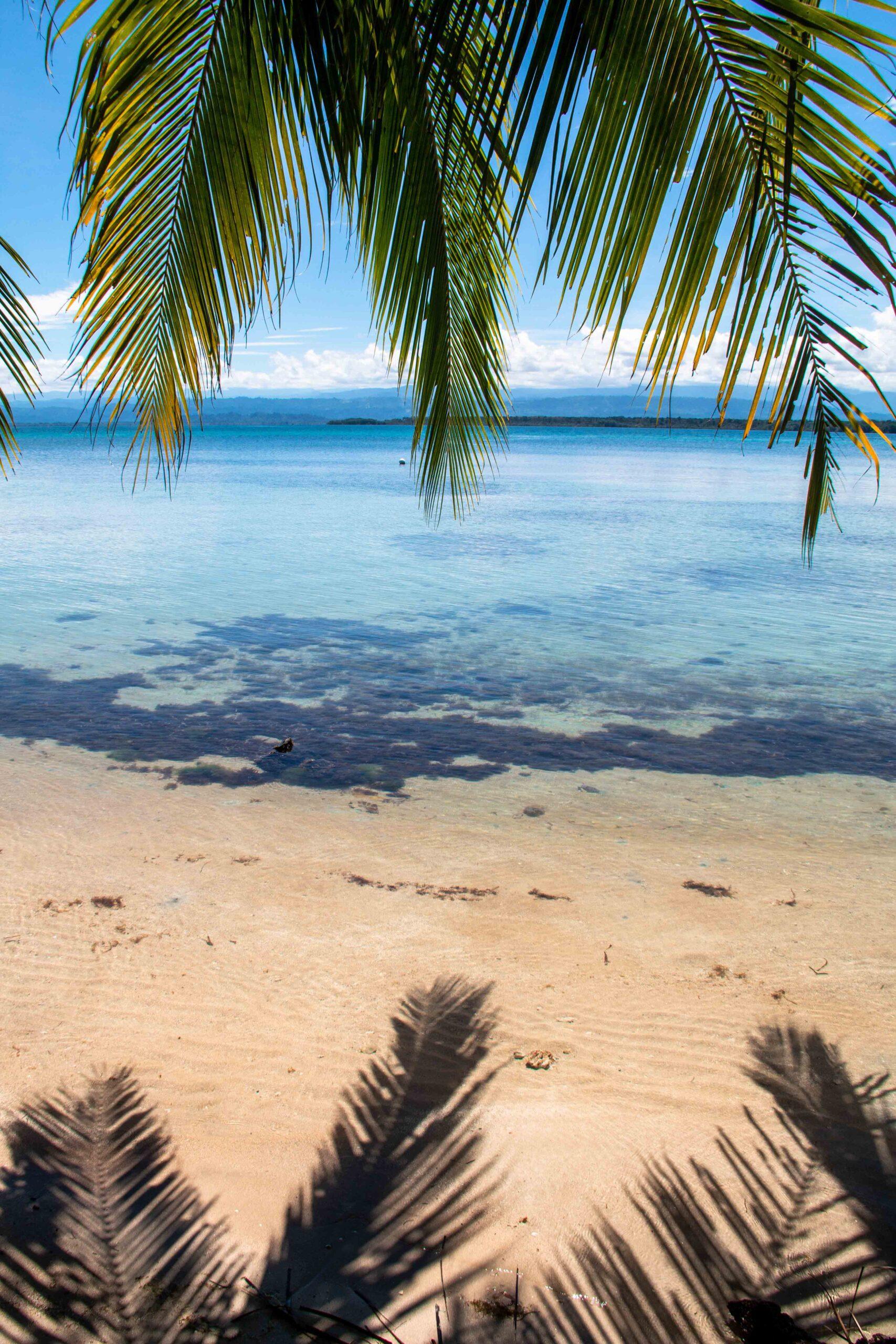 Palmtrees at Bocas del Drago Panama