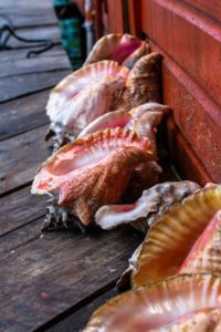 Sea shells on Bocas del Toro