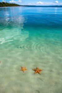 Starfish at Playa Estrella Bocas del Toro