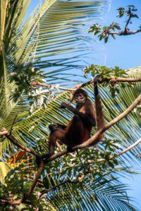 spider monkey jungle Rancho Burica