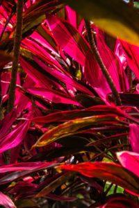 Plant Costa Rica