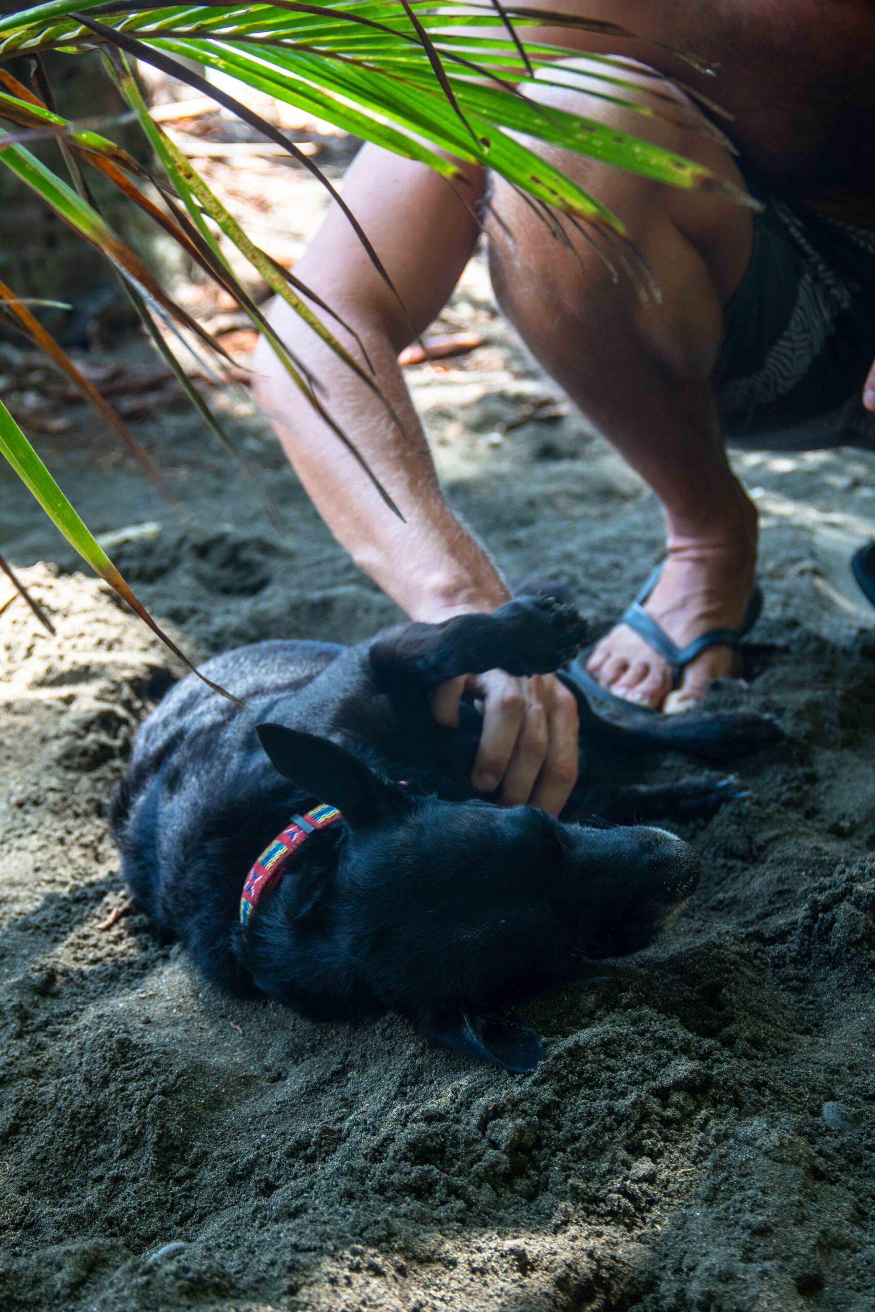 beach dog Rancho Burica