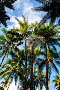 palmtrees Rancho Burica Costa Rica