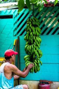 organic bananas Rancho Burica Costa Rica