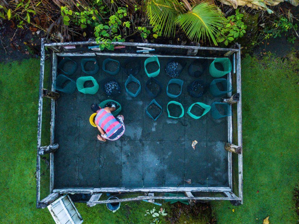Punta Banco Turtle conservancy hatchery