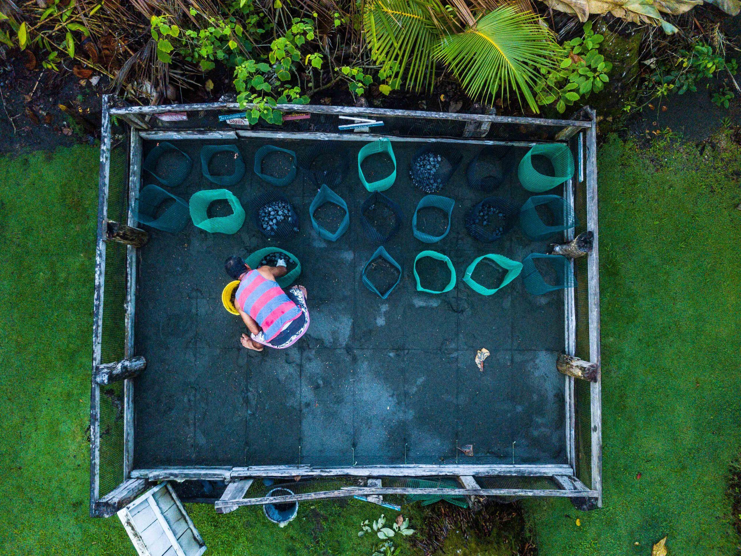 turtle project Punta Banco Costa RIca