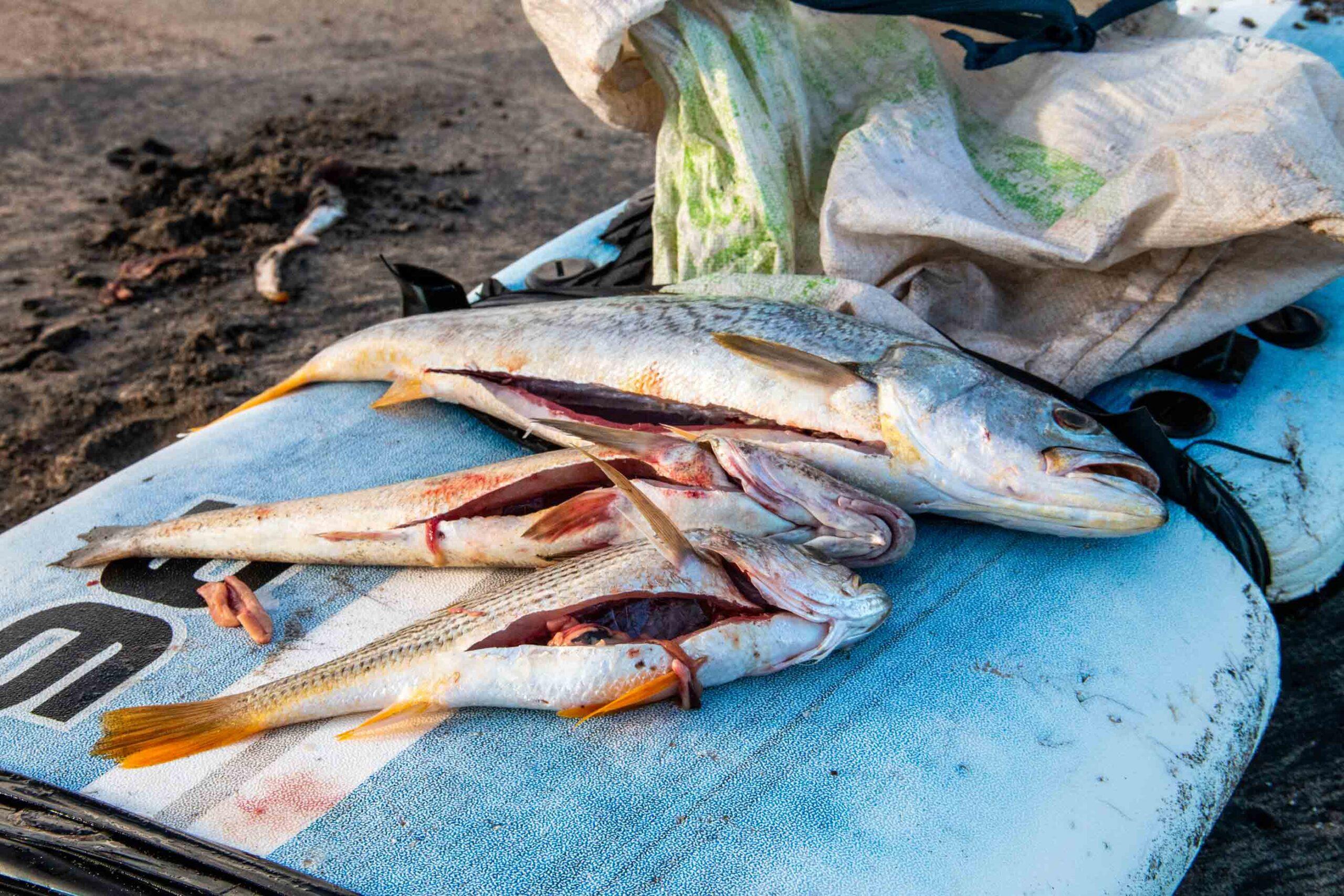 fresh fish at Playa Guasacate Nicargua