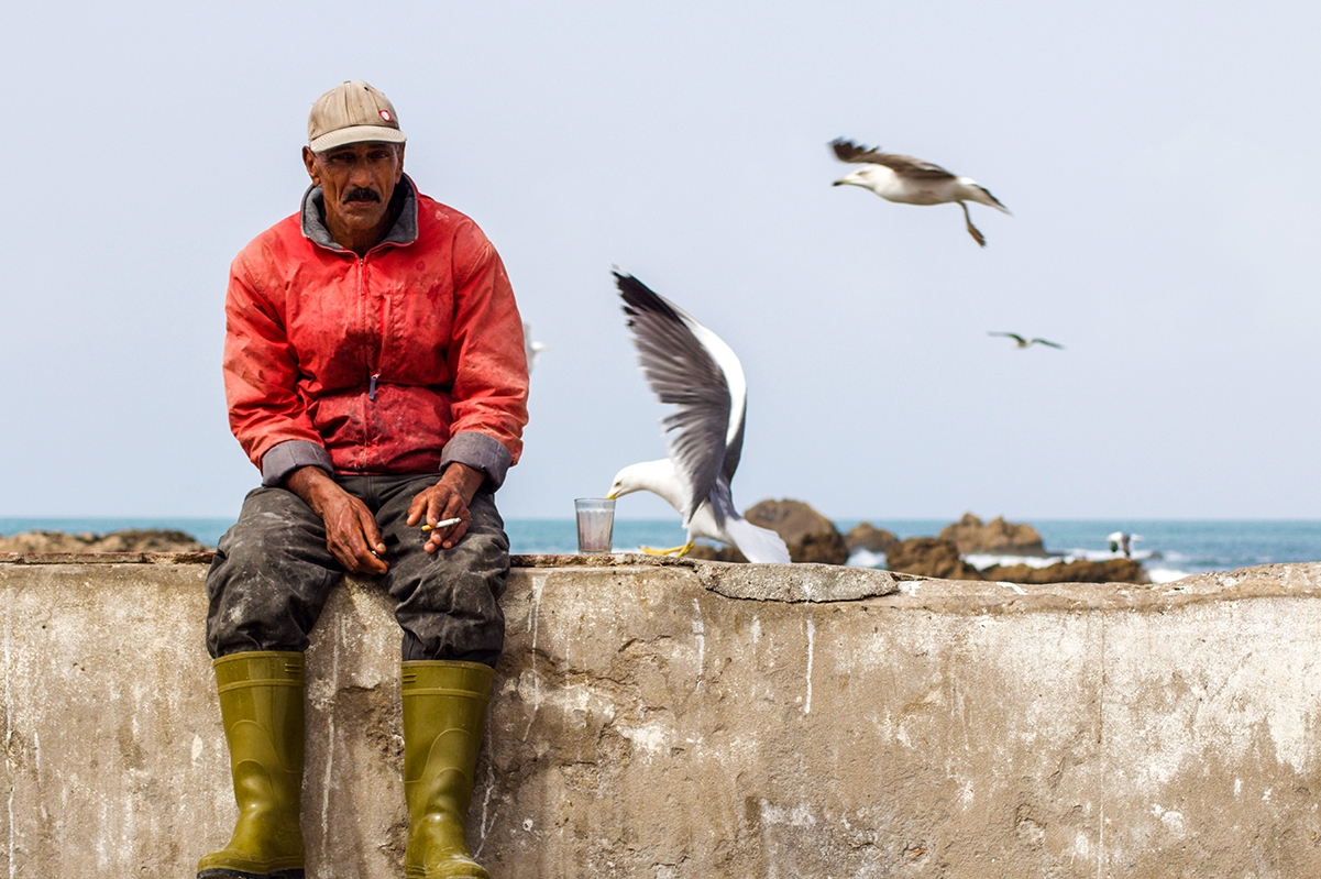 Fisherman and seagulls in Essaouira Morocco