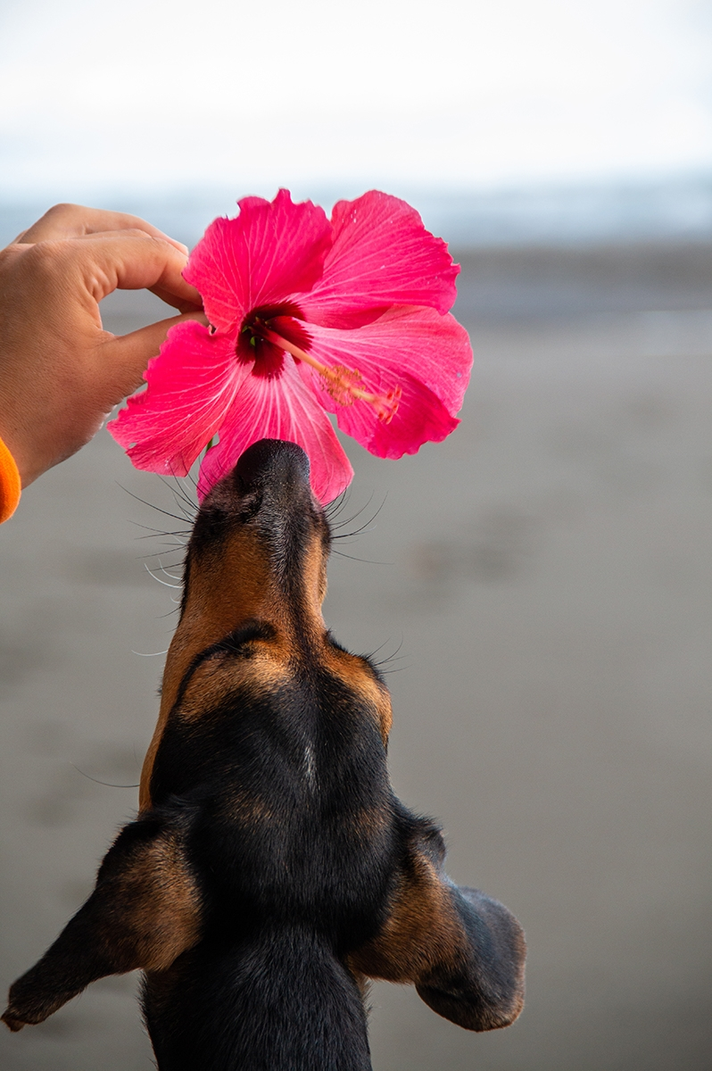 Dog on the beach in Costa Rica