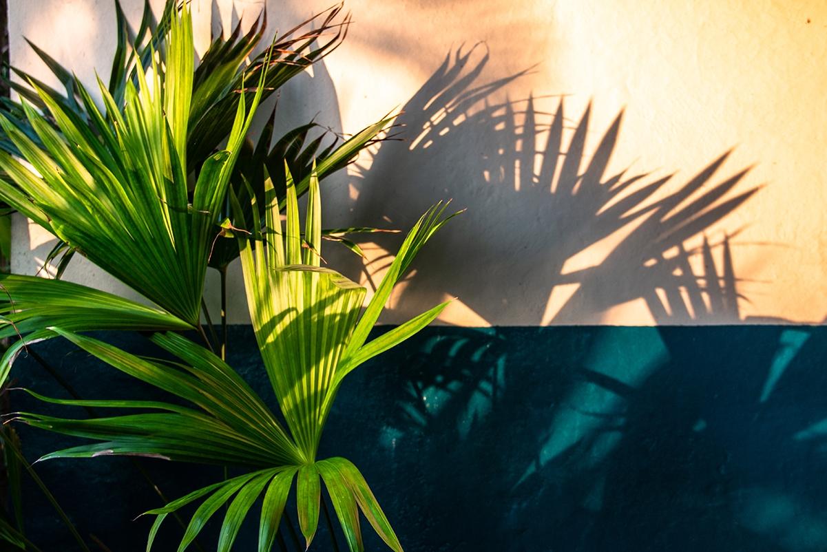 Plant shadows in Costa Rica