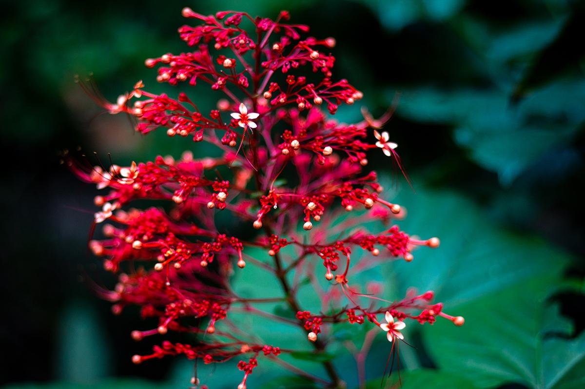 Flower at Congo Bongo garden Costa Rica