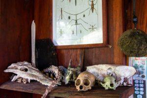 Animal skeletons at Finca Exotica Costa Rica