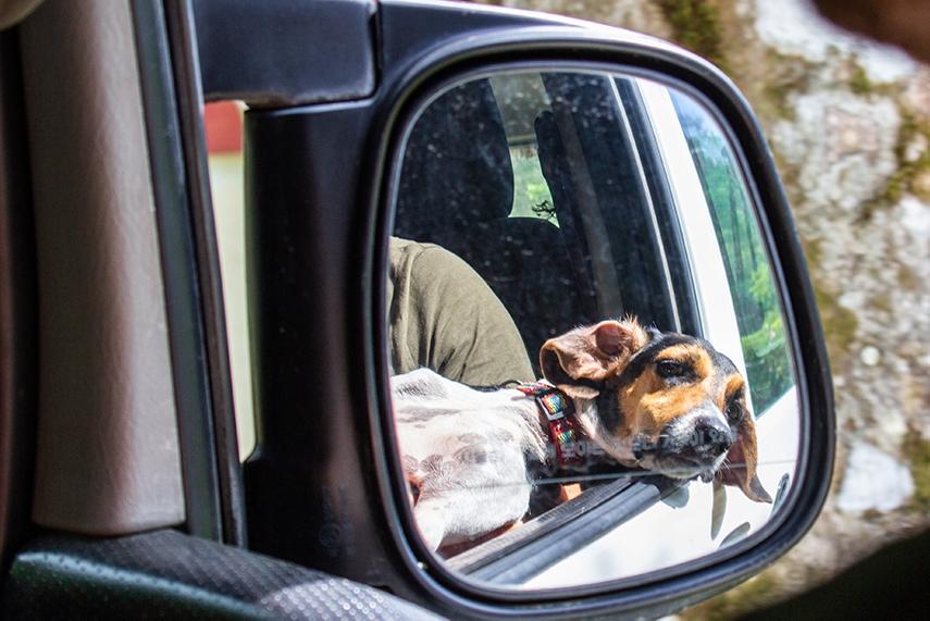 dog life in Pavones Costa Rica