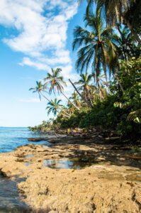 Palmtree view in Cahuita National Park Costa Rica