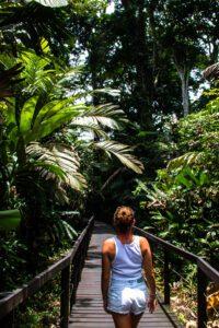 Jungle in Cahuita National Park Costa Rica