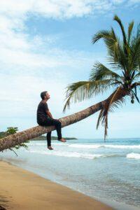 Palmtree on playa manzanillo in the Caribbean Costa Rica